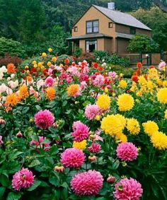 Garden Flowers - Annuals Or Perennials Dahlias Can Play A Leading Role In Your Garden's Finale. We Show You How To Fertilize And Deadhead Them To Encourage Recurring Blooms. Belle Plante, Flower Farm, Dream Garden, Belle Photo, Garden Inspiration, Champs, Beautiful Gardens, Gardening Tips, Organic Gardening