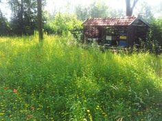Eigen Arbeid - Den Haag: Bijenstal met daarvoor een schitterende wilde bloemenweide.  In het voorjaar wordt de weide gefreesd en verschraald en daarna opnieuw ingezaaid.
