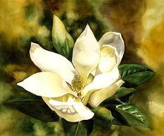 Southern Magnolia Painting by Alfred Ng - Southern Magnolia Fine Art Prints and Posters for Sale