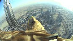 Dubai World Record Eagle Flight (uncut version, the full 5 minutes flight)