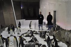 An amazing experience - meeting the penguins during the Penguin Passport Encounter at Sea Life Melbourne Aquarium