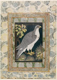 Royal Hunting Falcon (Baz). ca. 1610-20. India, Deccan, Bijapur. Islamic. Ink, opaque watercolor, and gold on paper.