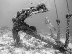Wreck Anchor in Bonaire