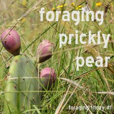 Foraging prickly pear    http://www.littleecofootprints.com/2012/07/foraging-prickly-pear.html
