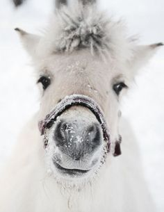 White horse in the snow..                                                                                                                                                                                 Plus