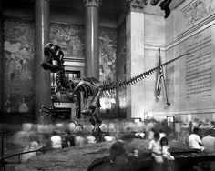 MATTHEW PILLSBURY » Dinosaur Coming to Life, American Museum of Natural History, 2004