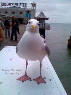 Cheeky Brighton Seagull by SimplyCharmingukshop on Etsy,
