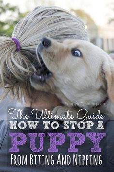 How to stop a puppy from biting and nipping #stoppuppybiting #dogtrainingnearme
