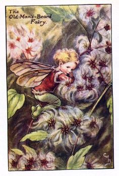 This beautiful Old-Mans-Beard Flower Fairy Vintage Print by Cicely Mary Barker was printed and is an original book plate from an early Flower Fairy book. Cicely Barker created 168 flower fairy illustrations in total for her many books. Cicely Mary Barker, Flower Fairies Books, Flower Beard, Kobold, Autumn Fairy, Fairy Pictures, Vintage Fairies, Beautiful Fairies, Fantasy Illustration