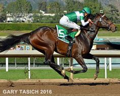 EXAGGERATOR. Exaggerator won the 2016 Santa Anita Derby, the 2016 Preakness Stakes and yesterday the 2016 Haskell Invitational Stakes. I thought the winner was Nyquist, Gun Runner second and Exaggerator was third.