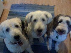 wikiHow to Entertain Dogs -- via wikiHow.com