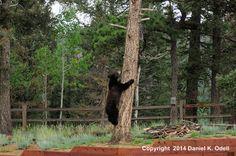 Bear after the bird feeder