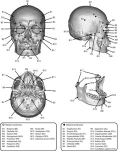 Skull Anatomy Coloring Page The anatomical landmarks of