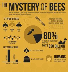 a bee-autiful infographic! Via: World Beekeeping Awards    Honey Bee Facts, Types Of Bees, Bee Supplies, Raising Bees, I Love Bees, Bee Farm, Bees And Wasps, Bee Friendly, Save The Bees