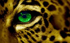 nice cat s eye wallpaper Check more at http://www.finewallpapers.eu/pin/2987/