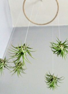 Airplant Mobile
