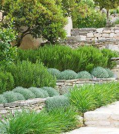Drought-Tolerant Landscaping Ideas   Garden Ideas   Pinterest ... on