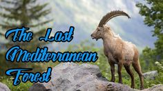 The Last Mediterranean Forest - National Geographic Documentary 2016 Nature Gif, Nature Videos, Happy Gif, Save Wildlife, Mountain Range, National Geographic, Habitats, Documentaries, Survival