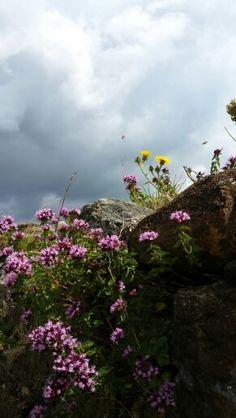 Dover castle flowers
