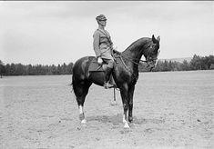 Löjtnant Claes von Essen på tjänstehästen Pascha E. Pascha - Insterburg på södra fältet (Sandfältet) söder Källedalsbäcken. 1929 yahre