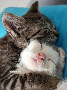 cute cats cuddling snuggles süße katzen kuscheln kuscheln cute cats cuddling snuggles # Memes cute cats - Drawing cute cats - With Captions cute cats Cute Cats And Kittens, I Love Cats, Crazy Cats, Kittens Cutest, Tabby Kittens, Kittens Playing, Cute Kitten Meme, Kitten Names, Puppies And Kitties