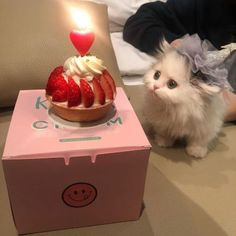 February 26 2020 at Cute Baby Cats, Cute Little Animals, Kittens Cutest, Cats And Kittens, Cute Babies, Cat Birthday, Happy Birthday, Cat Aesthetic, Animals And Pets