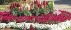 Stunning Ornamental Gardens 03