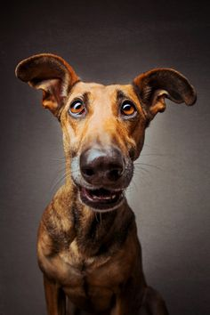 Wieselblitz - what a fabulous face! ♡... Re-pin by StoneArtUSA.com