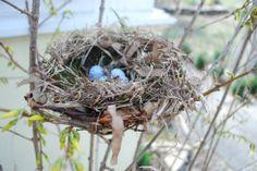 Making Bird's Nests