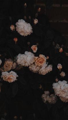 Wallpapers for iPhone and Android. Click the link below for Tech News n Gadget Updates. Dark Wallpaper, Tumblr Wallpaper, Wallpaper Backgrounds, Black Flowers Wallpaper, Vintage Flower Backgrounds, Vintage Floral Wallpapers, Phone Wallpapers, Wallpaper Quotes, Aesthetic Pastel Wallpaper