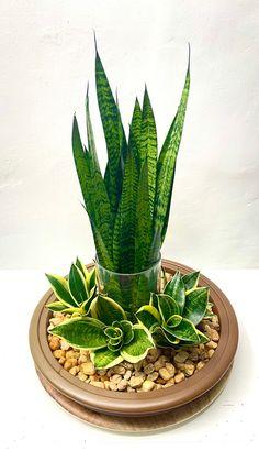 Succulent Gardening, Planting Succulents, Planting Flowers, Decoration Cactus, Decoration Plante, House Plants Decor, Plant Decor, Plante Pothos, Portulaca Flowers