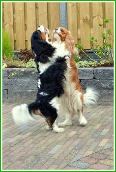 ..yes I am taller than you.....see?