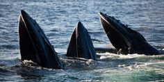 Hyannis Whale Watcher tips