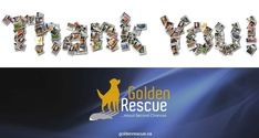 THANK YOU to everyone who donated to our auction, to those who bid and purchased items and to the team of volunteers who made our Spring Online Auction such a success. We raised $18,685!!! 100% of the money raised goes to helping the Goldens in our care. Thank you from our Goldens and from all of us! #goldenretriever #rescuedog #secondchances #adoptdontshop Golden Events, Second Chances, The Day Will Come, 30th Anniversary, Above And Beyond, Rescue Dogs, Fundraising, Adoption, Thankful