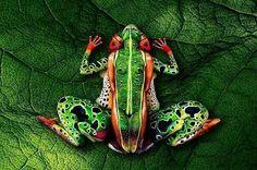 Body painted frog El body paint no pertenece a ningún estilo definido de arte.