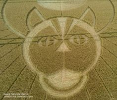 Crop Circle at Figsbury Ring, Firsdown, Wiltshire. Reported 22nd July 2016