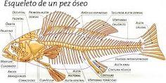 Resultado de imagen para imagenes para imprimir del sistema oseo de un mamifero
