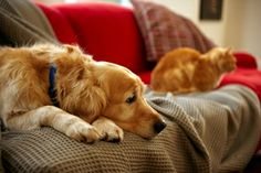 Tips for couples moving in with pets | VCA Animal Hospitals