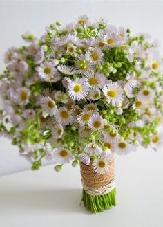 Today we are talking about a beautiful little flower that when it blooms let's us know the end of Summer is near, the Aster, September's birth month flower.