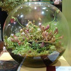 terrarium selber bauen mini terrarium für pflanzen