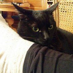 Qué estás mirando? #gatonegro #gato #sora #gatanegra #blackcat #cat #catsofinstagram #lovelycat #gatosdeinstagram #gatosdelmundo #pelusa #pelusanegra #amordegato #catslove #catslover #catstagram #catexperience #gatovago #catoftheday #crazycatlady #caturdays365