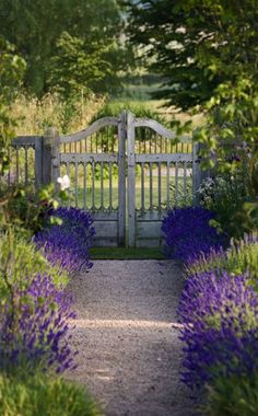 Lavender borders a gravel path that leads to a weathered garden gate
