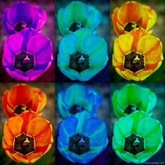 Colorful Tulip Collage by Striking Photography by Bo Insogna, via Flickr