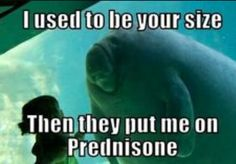 So damn funny. Let's talk about one of the most feared medications--Prednisone. For the few that do not know what I am talking about, it is a corticosteroid. Prednisone is used as an anti-inflammatory or an immunosuppressant medication. Most Kidney Psoriatic Arthritis, Ulcerative Colitis, Autoimmune Disease, Crohn's Disease, Kidney Disease, Rare Disease, Hypothyroidism, Pharmacy Humor, Medical Humor