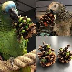 Parrot foraging toy: pine cones filled with veggies and treats.