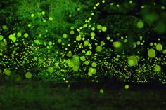 Welcome back Fairies~♪ by yume . on 500px