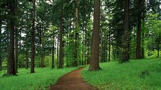 Forest Park Conservancy in Portland, OR