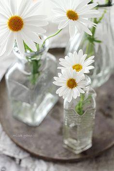 daisies! ~
