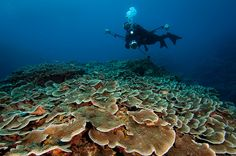 Reef dwelling at Ie jima by Okinawa Nature Photography, via Flickr