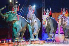 Einstimmige Entscheidung im Sozialausschuss – Bezirksregierung soll rechtliche Prüfung vornehmen +++  Zirkusse mit Wildtieren sind jetzt tabu